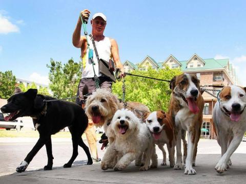 caminador de perros