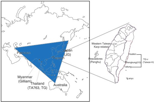 triangulo-tsutsugamushi